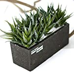 5-pcs-Artificial-Succulents-Aloe-Vera-Flower-Real-Like-Mini-Artificial-Green-Plants-for-Living-Room-Bedroom-Home-Garden-Party-Decor-Indoor-Decoration-Vase-Not-Included