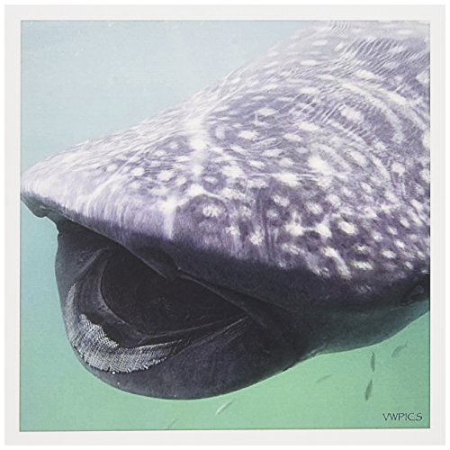 3d Rose 3dRose Whale Shark (Rhincodon typus) - showing it...