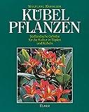 Kübelpflanzen: Südländische Gehölze für die Kultur in Töpfen und Kübeln