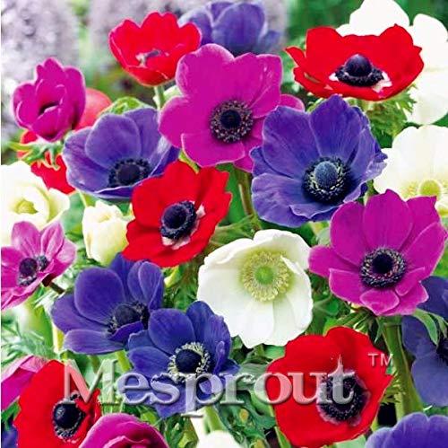 (New Arrival 50PCS Seeds Home Garden Plant Violet Anemone Pulsatilla Vulgaris Purple Pasque Flower Seeds)