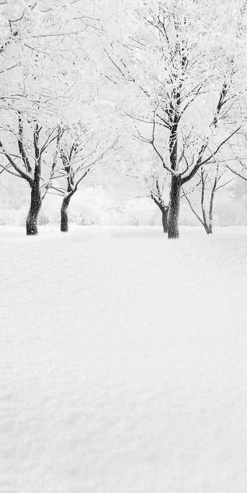 GladsBuy Real Winter Snow 10' x 20' Digital Printed Photography Backdrop Christmas Theme Background YHA-054