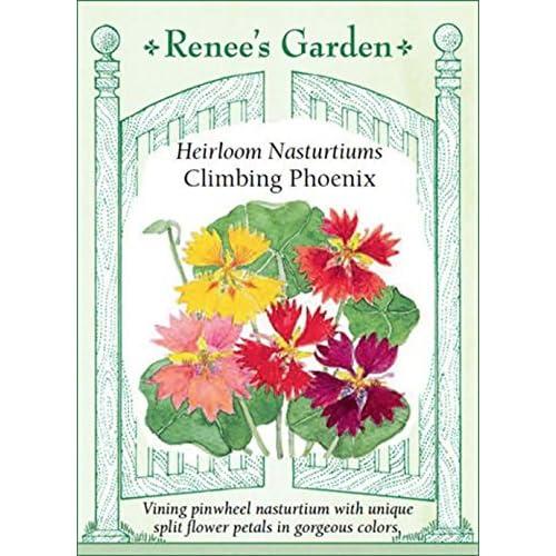 Discount 'Climbing Phoenix' Heirloom Nasturtiums free shipping
