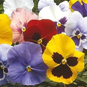 King's Seeds Semillas para flores (invierno)