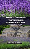 How to Grow Lavender Flower and Care: A Step by