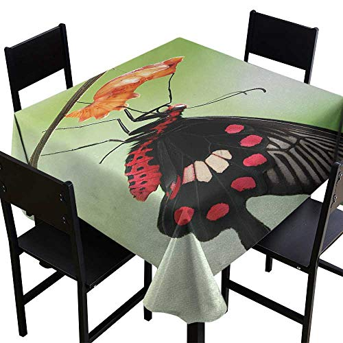 Warm Family Swallowtail Butterfly Decorative Textured Fabric Tablecloth Amazing Moment Coming Out of Cocoon Chrysalis Transformation Indoor Outdoor Camping Picnic W63 x L63