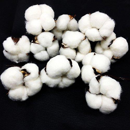 11 Pcs Cotton Bolls Natural Pods Decor Farmhouse Christmas Artificial Flower Head Flower Garland Craft Flower Wedding Decoration Wreaths (11) (Farm Birch White)