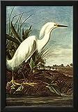 Audubon Snowy Egret Bird Art Poster Print Framed Poster 15 x 21in