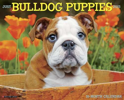 english bulldog 2015 calendar - 2