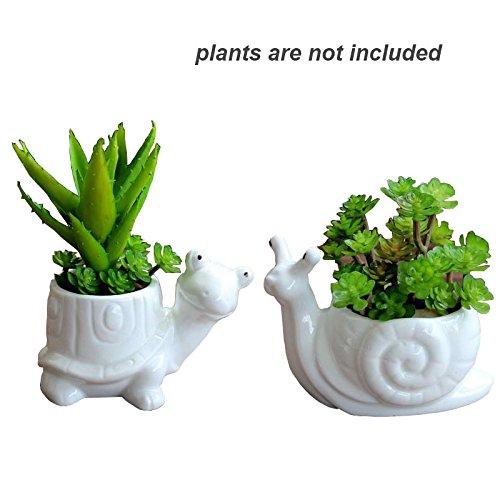 Everyday Better Life 2 PCS Set Cute Animal Snail Tortoise Shaped Cartoon Ceramic Succulent Cactus Flower Pot/Plant Pots/Planter/Container for Home Garden Office Desktop Decoration