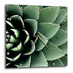 3dRose dpp_92676_2 Agave Cactus Succulent, Santa Fe, New Mexico US32 JMR0454 Julien McRoberts Wall Clock, 13 by 13-Inch
