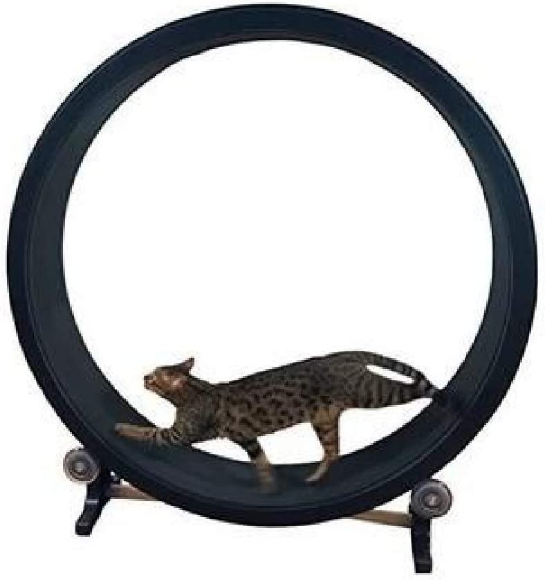 Best Cat Exercise Wheel