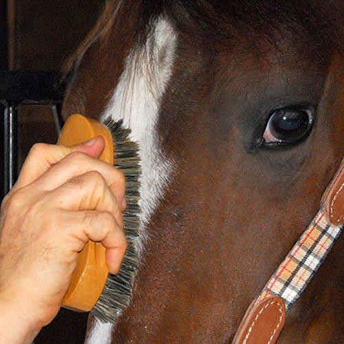 (Intrepid International Pig Bristle Animal Face Brush)