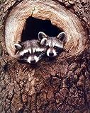 Baby Raccoon Sitting in a Tree Hole Wild Animal Wall Decor Art Print Poster (8x10)