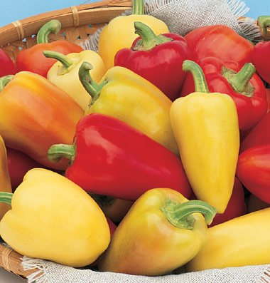 David's Garden Seeds Pepper Specialty Antohi Romanian D595A (Red) 50 Organic Heirloom Seeds
