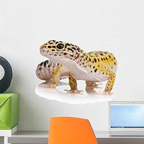 Wallmonkeys Leopard Gecko Eublepharis Macularius Wall Decal Peel and Stick Graphic WM290298 (18 in W x 14 in H)