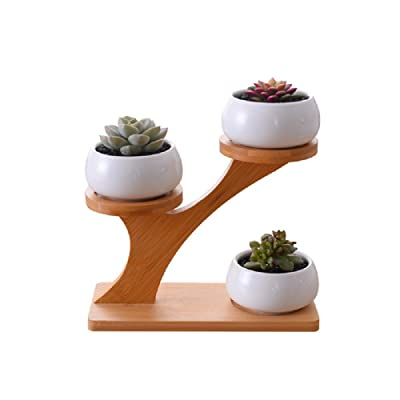 Youfui Cute Round Succulent Planter Flower Pot Decor for Home Office Desk (3 Tier with Stand): Garden & Outdoor