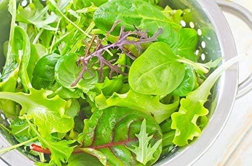 Fitness Mix Graines de m/élange de l/égumes feuilles