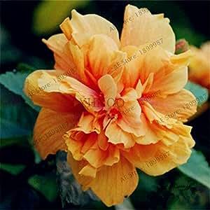 50pcs / bag Hibiscus mutabilis semillas de flor de casas y jardines perenne maceta plantas de la flor del hibisco feliz granja Bonsai semilla 4