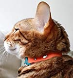 Kittyrama Tangerine Cat Collar. Award Winning. As