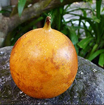 amazon com home garden 5 seeds orange yellow colombia passion