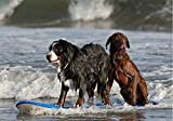 Surf Dogs Postcards (Surf Dogs Products)