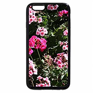 iPhone 6S / iPhone 6 Case (Black) A fantastic day at Edmonton garden 48