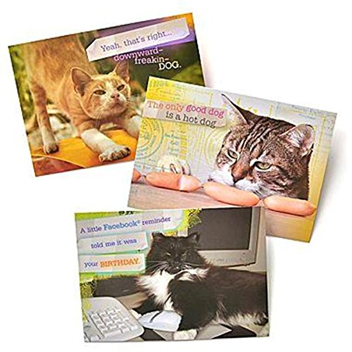 Amazon Cat Humor Greeting Cards Office Products