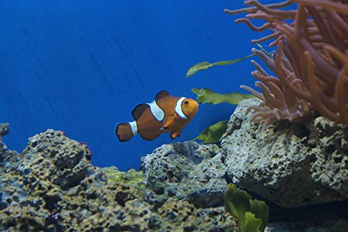 Home Comforts Framed Art for Your Wall Clown Fish Aquarium Nemo Fish Coral Reef Vivid Imagery 10 x 13 Frame