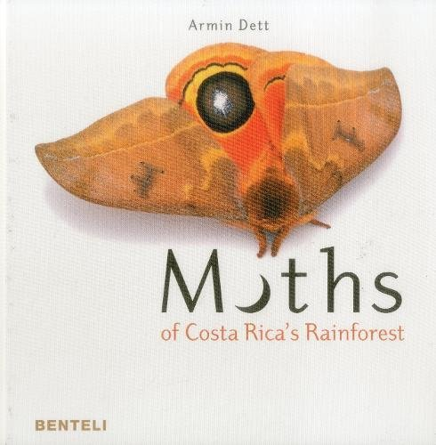 moths-of-costa-rica-s-rainforest
