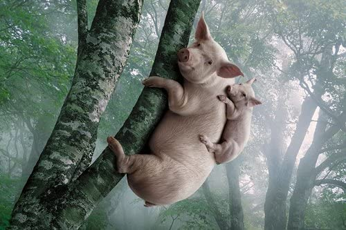 豚と豚が木に登ります動物の写真 キャンバス印刷アートポスター(50cmx75cm)