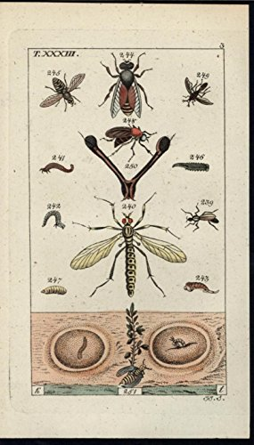 stages-of-an-insects-life-larva-pupa-1811-antique-engraved-hand-color-print