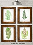 Antique Fern Botanical Prints - Set of Four Photos (8x10) Unframed - Makes a Great Gift Under $20...