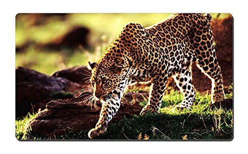 Cheetah C6 Animal Picture Game Office Large Mouse Pad - C6 Of Picture