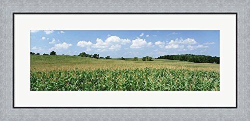 Corn Crop In A Field, Wyoming County, New York State, USA by Panoramic Images Framed Art Print Wall Picture, Flat Silver Frame, 35 x 17 inches