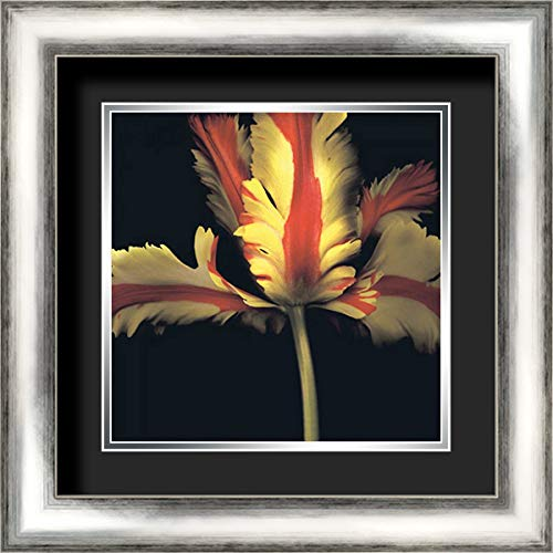 French Parrot Tulip 20x20 Silver Contemporary Wood Framed and Double Matted (Black Over Silver) Art Print by Levine, Andrew