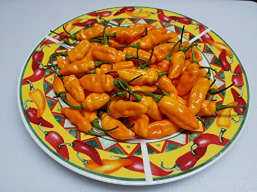 - Datil Hot Pepper 10+ Seeds