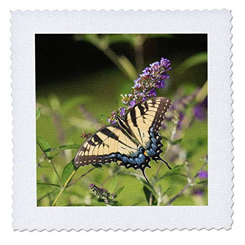 3dRose Danita Delimont - Butterflies - Eastern Tiger Swallowtail on Butterfly Bush, Illinois - 22x22 inch quilt square (qs_314820_9)