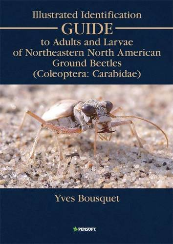 Illustrated Identification Guide to Adults and Larvae of Northeastern North America Ground Beetles: (Coleoptera Carabida