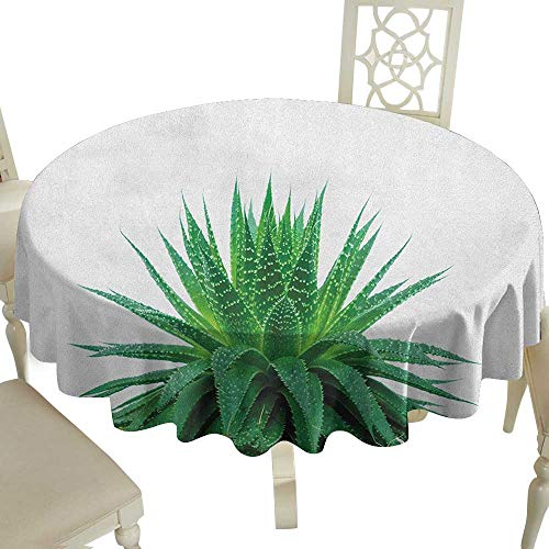 Cranekey Striped Round Tablecloth 60 Inch Plant,Medicinal Aloe Vera with Vibrant Colors Indigenous Species Alternative Natural Remedy Fern Green Great for,Coffee & More