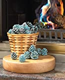 The Lakeside Collection Rainbow Flame Coloring Pine Cones -