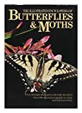 img - for The Illustrated Encyclopedia of Butterflies & Moths book / textbook / text book