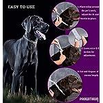 Collare-antipulci-e-zecche-per-Cani-Collare-Regolabile-Impermeabile-Soluzione-Naturale-Contro-i-parassiti-per-Cani-Adulti-63-cm-8-Mesi-Taglia-Unica-per-Tutti-i-Cani-1-Pacco