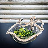 Small Octopus Glass Bowl by Culinary Concepts