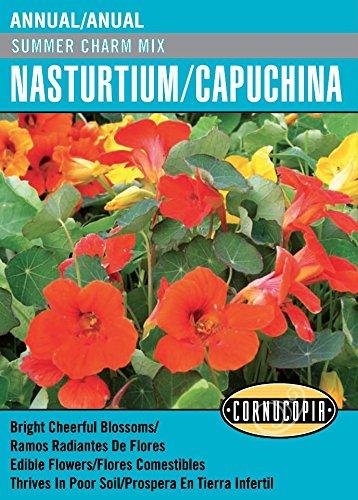 60b69cbcef0e Amazon.com : 'Summer Charm Mix' Nasturtium/Capuchina - Spanish/English :  Garden & Outdoor