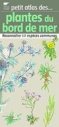 Plantes du bord de mer : Reconnaître 60 espèces communes