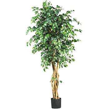 Amazon.com: Nearly Natural 5210 Ficus Silk Tree, 7-Feet, Green ...