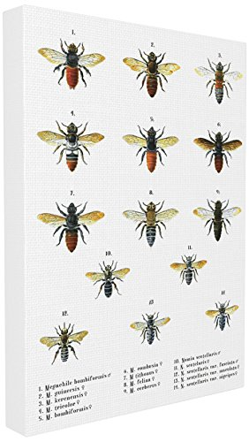 (The Stupell Home Décor Collection Bees Scientific Vintage Illustration Oversized Stretched Canvas Wall Art 24 x 30)