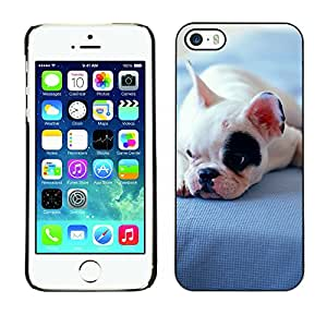 Hot Style Cell Phone PC Hard Case Cover // M00100556 animals bulldog puppy // Apple iPhone 5 5S