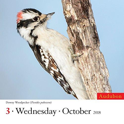 Audubon Birds 2018 Color Page-A-Day Calendar Photo #3