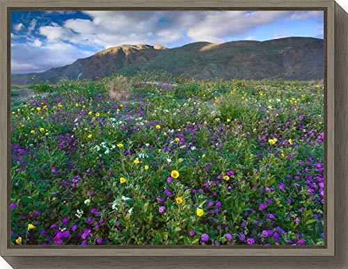Framed Canvas Wall Art Print Wildflowers Carpeting The Ground Beneath Coyote Peak Anza Borrego Desert California by Tim Fitzharris 23.50 x 18.00 (Anza Borrego Wildflowers Best Time)